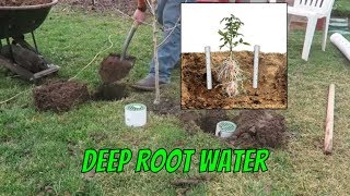TG DIY Deep Root Watering System