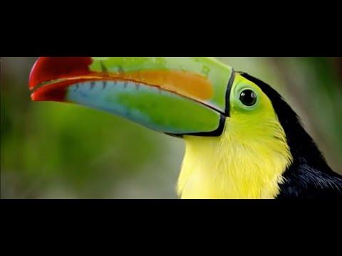 ONU nombra a Costa Rica como 'campeón de la Tierra', su máximo galardón ambiental