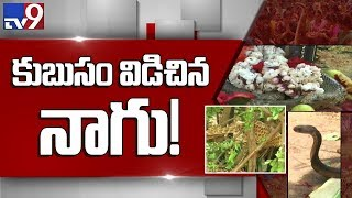 Cobra sheds its skin : Devotees throng to see snake in Durgada - TV9