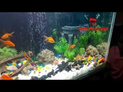 Best aquarium setup decoration | Pet India