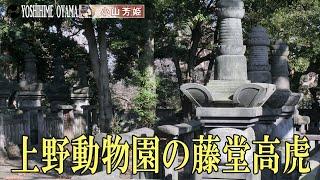 上野動物園の藤堂高虎