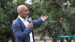 "Pomegranate Valley"" agro tour was organized in Hajigabul"