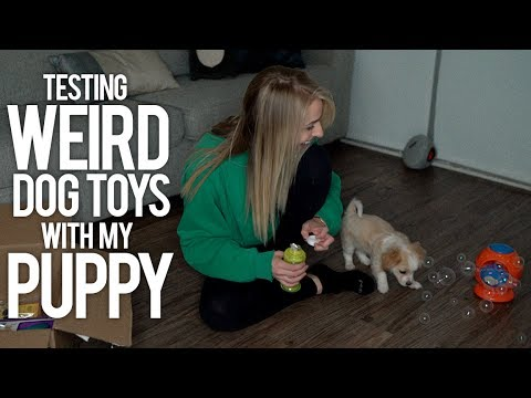 TESTING WEIRD DOG TOYS WITH MY PUPPY