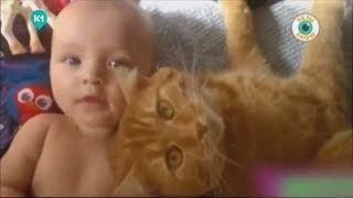 Дети и их животные. Ух ты show. Выпуск 12
