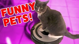 CATS RIDING ROOMBAS & MORE Funny Pet Clips, Bloopers & Outtakes Weekly Comp | Funny Pet Videos