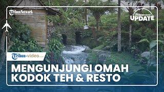 TRIBUN TRAVEL UPDATE: Mengunjungi Omah Kodok Teh & Resto di Tawangmangu yang Sejuk