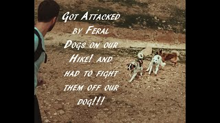 Got attacked by feral dogs on a hike !!!