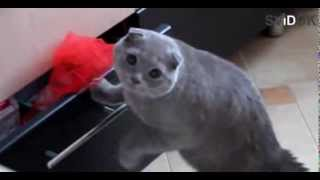 Застукали кота. Смотрим до конца ))