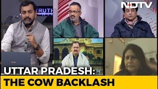 "Truth vs Hype: Is Yogi Government Facing A ""Cow Backlash""?"