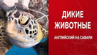 ИЗУЧАЕМ АНГЛИЙСКИЙ САМОСТОЯТЕЛЬНО С НУЛЯ/Уроки На Сафари  по-английски ч.4/Wild animals