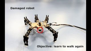 Towards semi-episodic learning for robot damage recovery