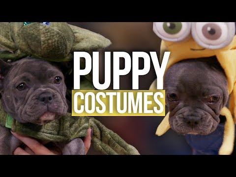PUPPY Halloween Costumes Ft. ADELAINE MORIN (Beauty Break)