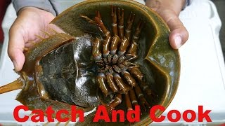 Catch And Cook: 450 Million Year Old Living Fossil   Horseshoe Crab