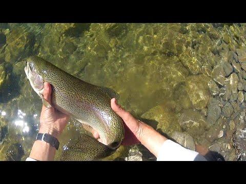 Come prendere il pesce su una filatura in un gioco su pesca