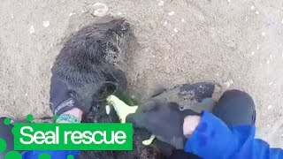 Kayaker Rescues Multiple Baby Seals Trapped in Netting