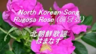 NorthKoreanSong해당화北朝鮮歌謡海棠花ハマナス