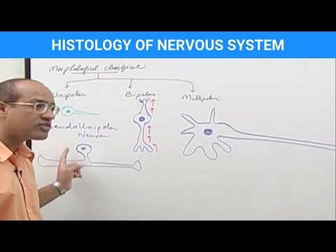 Histology of the Nervous System