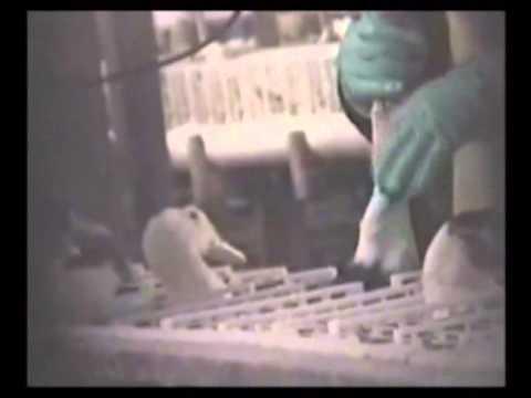 Eliminazione di prezzo di coni gemorroidalny