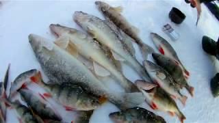 Фион 37 отчет о рыбалке 2019