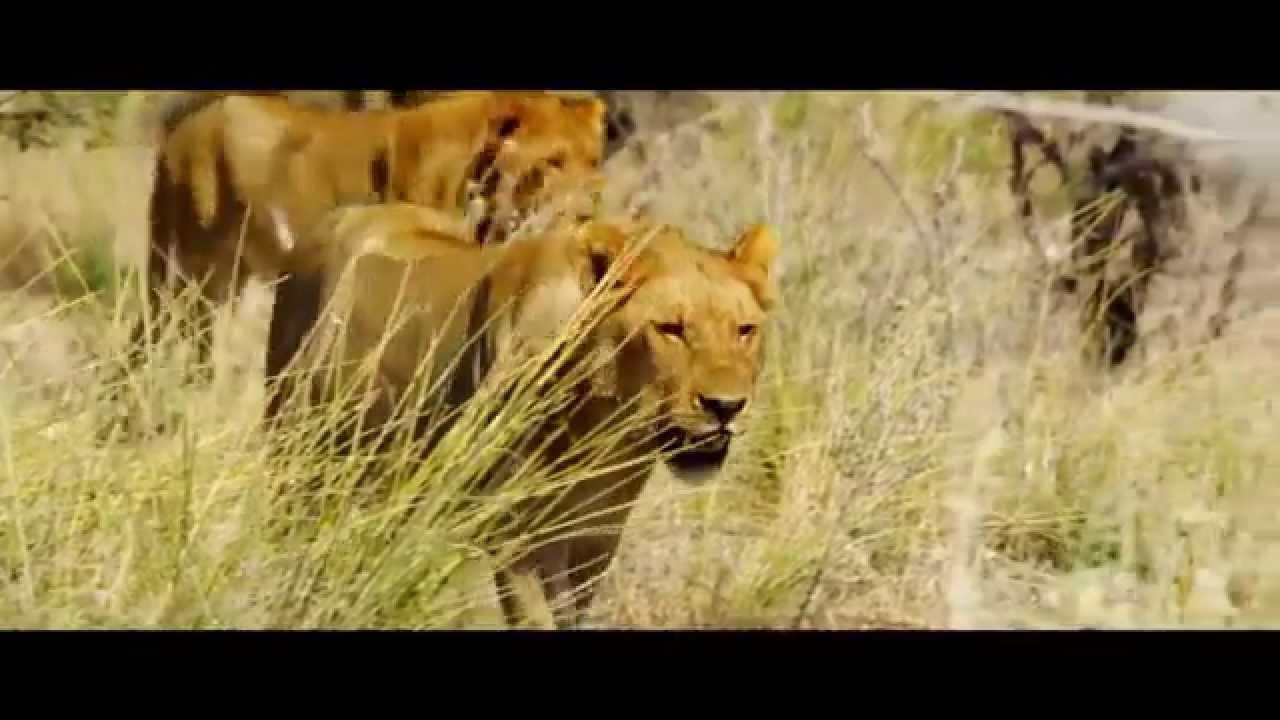 Namibia: Safari (0:20)
