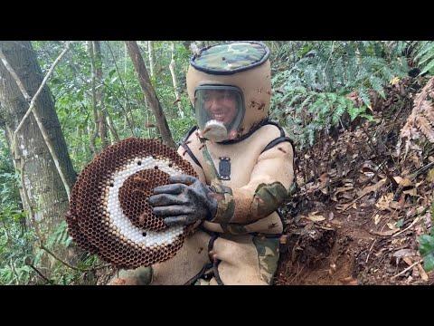 How Murder Hornet Nests are Eradicated in Japan