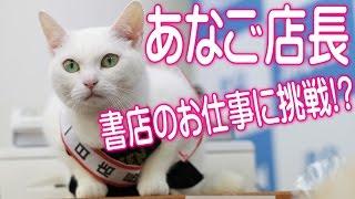 映画『猫侍』出演で大人気の美猫「あなご」ちゃんが書泉の一日店長に就任!☆書泉チャンネル