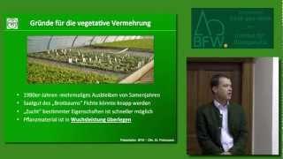 preview picture of video 'Klonfichten im Forstbetrieb Mayr-Melnhof -- eine Erfolgsgeschichte'