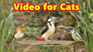 Videos for Cats : Forest Birds Extravaganza - 8 HOURS