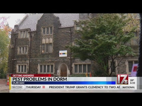Pest problems at Duke University dorm