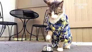 Приколы с Котами   Смешные кошки