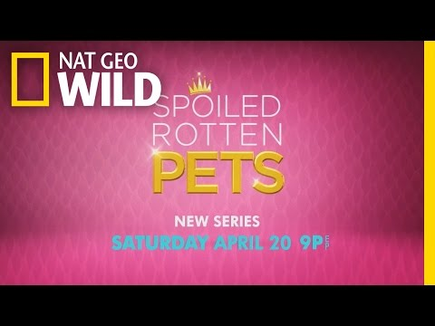 Official Trailer | Spoiled Rotten Pets