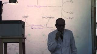 12) Dr.Rasheed 23-3-2015 [heme metabolism - conjugated and unconjugated billirobin]