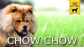 CHOW CHOW trailer documentario