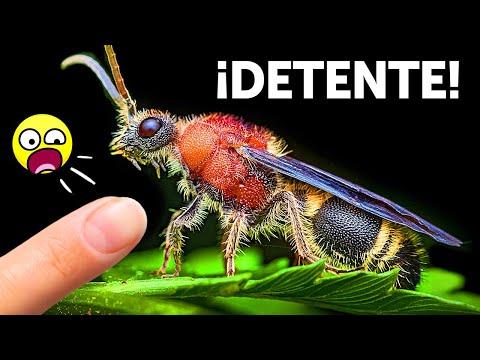 ¡Si Ves a Esta Hormiga Impostora, Ten Cuidado Con Su Aguijón!