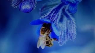 Ловушка для пчел (роев) с супер приманкой (работает на все 100%) - готовимся к сезону. Пчеловодство.