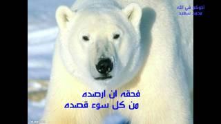 اغاني طرب MP3 حكاية الدب بصوت الشيخ توفيق الصائغ.avi تحميل MP3