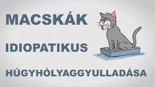 Macskák húgyúti szindrómája