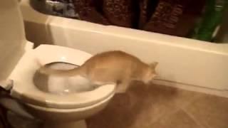 Кот упал в унитаз