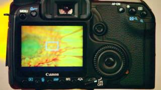Live View to Focus - Two Minute Photo Tips