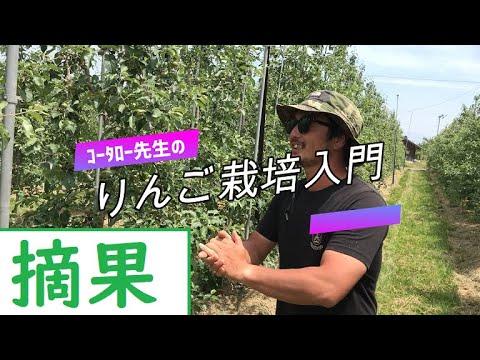, title : '【りんご栽培入門1】#摘果(ふじ・シナノリップ)【コータロー先生】撮影日2020年6月4日