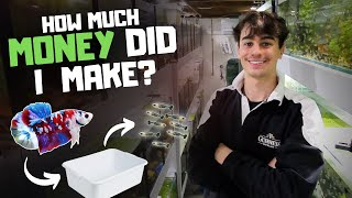 How Much Money I Made Breeding Bettas in Tubs!