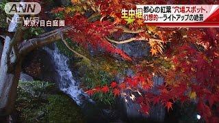 """住宅街に幻想的絶景・・・都心の紅葉""""穴場スポット""""16/11/26"""