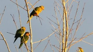 South America Trip Featuring Wild Parrots