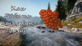 Как добыть лососевую икру в Skyrim(Лучший игридиент для алхимика