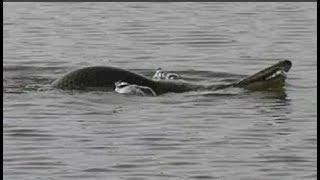 Thủy quái 'nửa rùa nửa rắn' gây xôn xao tại Trung Quốc