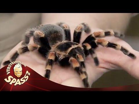Die digitale Spinne von Simon Pierro   Verstehen Sie Spaß?