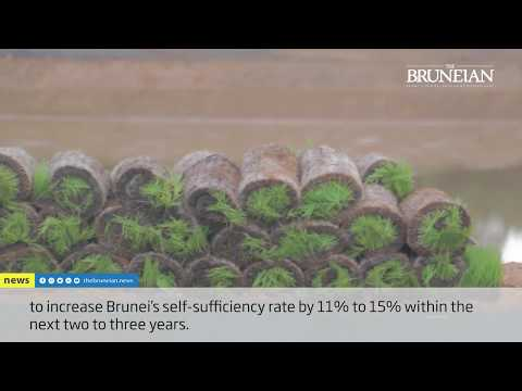 Kandol, Brunei\\'s largest paddy plantation field launched.