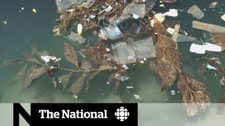 Cleaning up the Great Pacific Garbage Patch | Dispatch