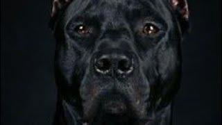 10 psów z najsilniejszym uściskiem szczęk