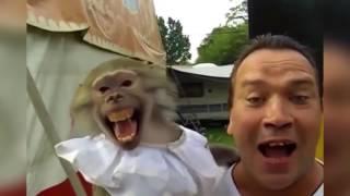 Самые Смешные Приколы Про Животных 2016 2017 года